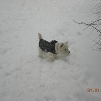 Hatalmas hóban futkározás
