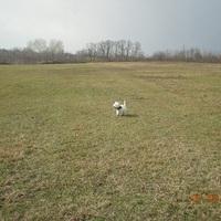 Kutyaiskola keresés