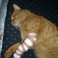 Piri cica beteg lába