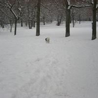 Hancurozás a hóban