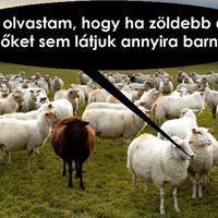 A jó Pásztor?