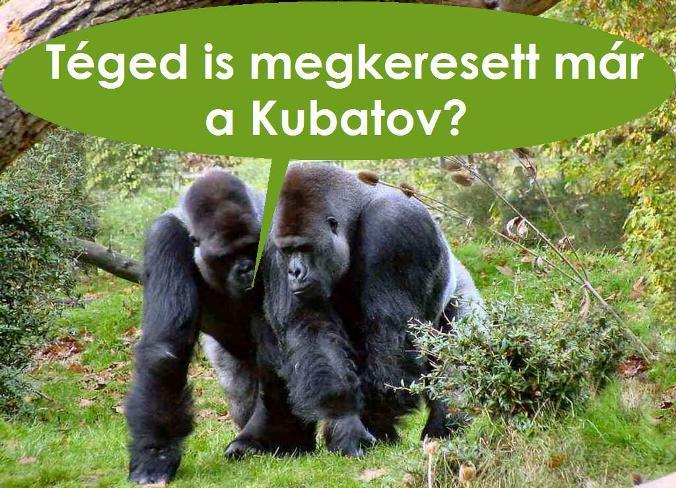 Gorillák.jpg
