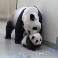 Visszaparancsolta az ágyba a kispandát az anyukája - Videó