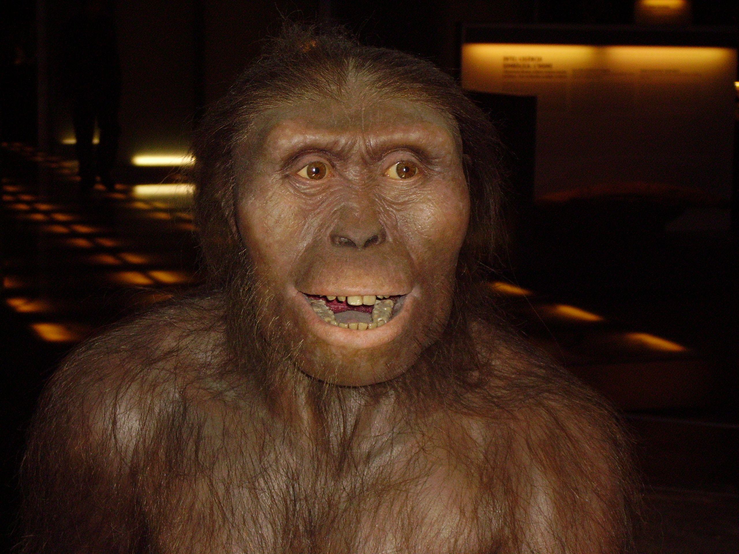 australopithecus_afarensis.JPG