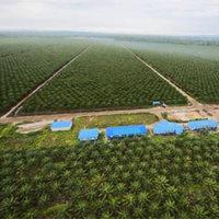 Pálmaolaj-mentes tisztítószerek, az esőerdők védelmében!