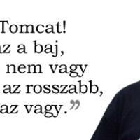 Tomcat vitakultúrája