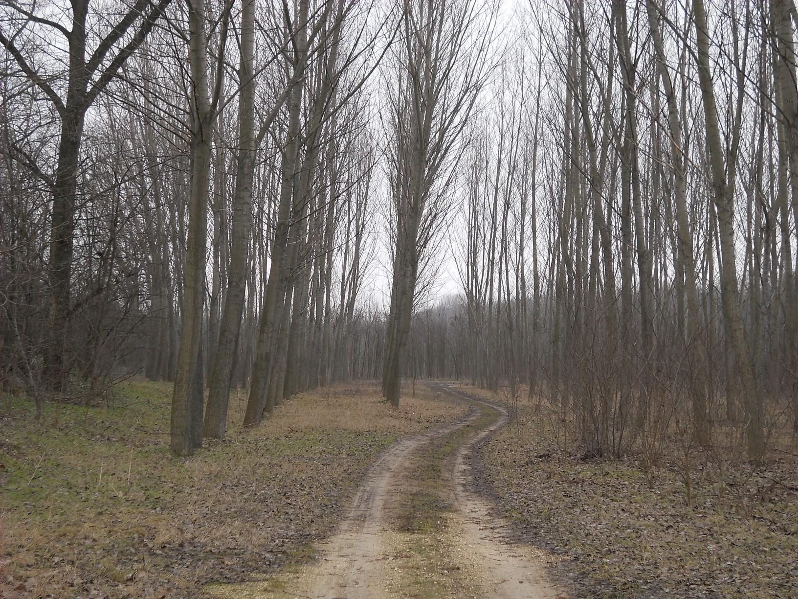 """Egyetlen dűlőút vezet egyenesen Alsópakonyba, kénytelen voltam """"illetéktelenül belépni"""" a magánerdőket átszelő útra"""