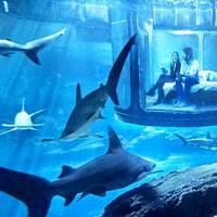 A világ legmenőbb szobája: Aludjon 35 cápa szomszédságában!