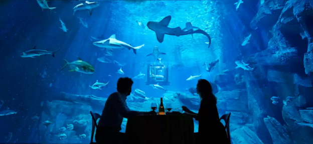 airbnb-shark-paris-aquarium-bedroom-4.jpg