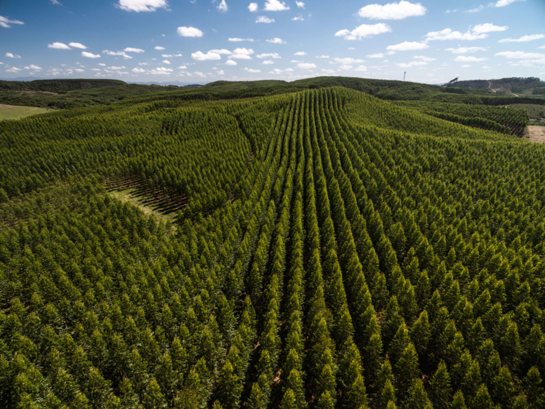eucalyptus-forest_sao-paulo-brazil_shutterstock_507937129_web.jpg