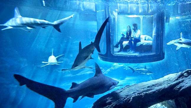 sleeping-with-sharks.jpg