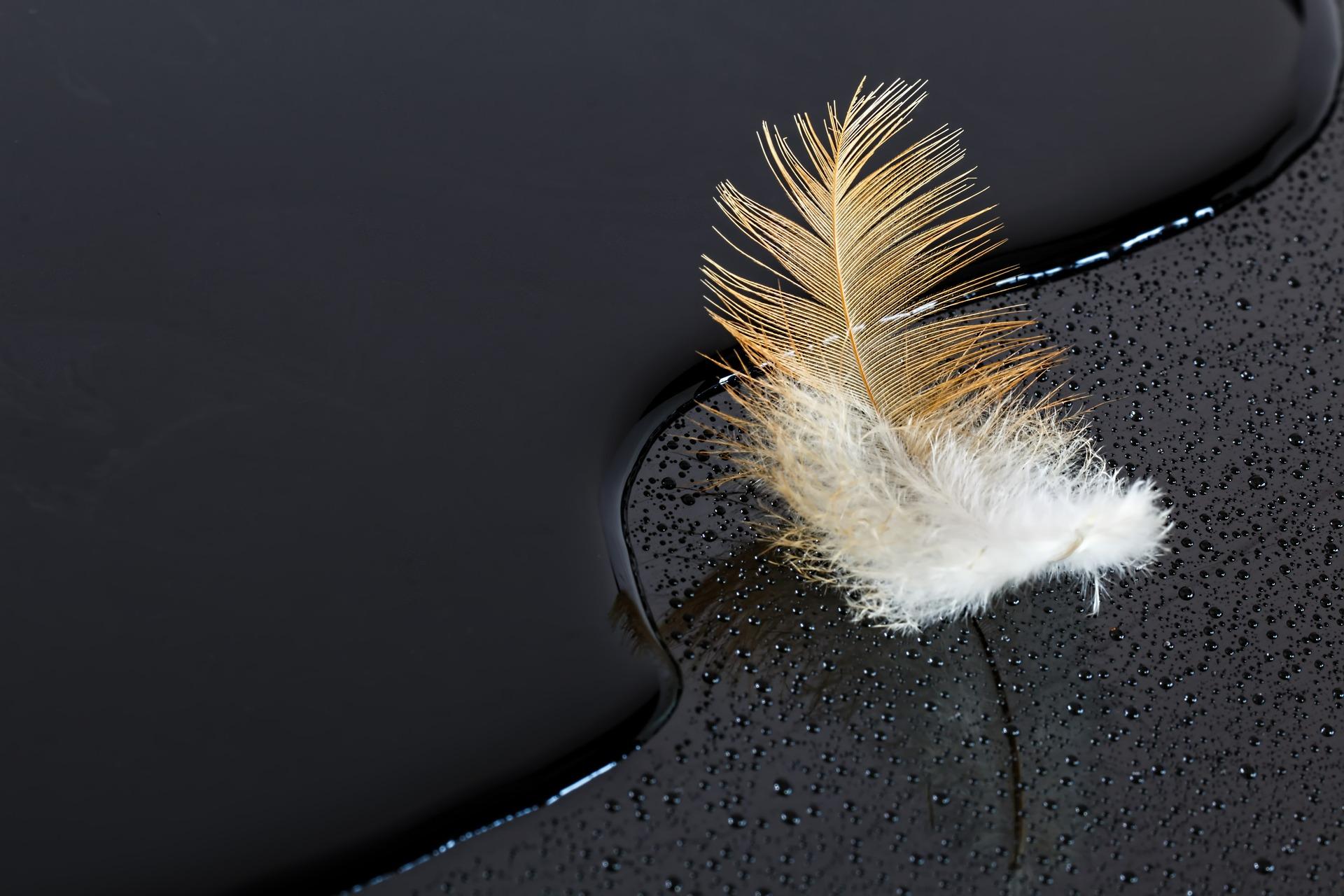 feather-406761_1920.jpg