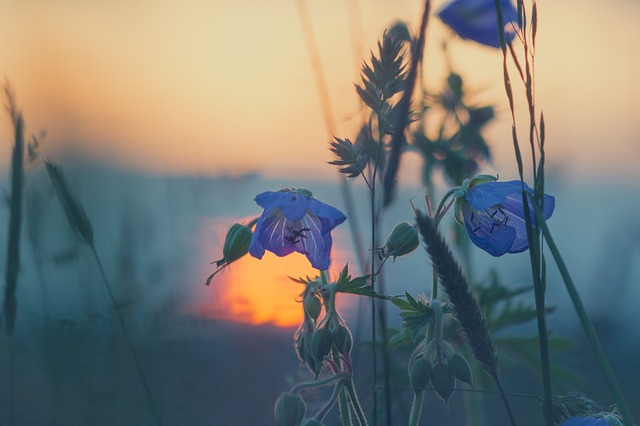 meadow-811339_640.jpg
