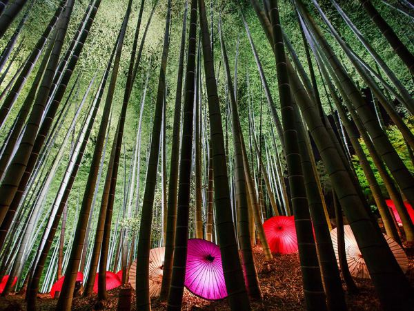 trees-woods-light-umbrella.jpg
