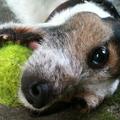 Távhatás kutyára