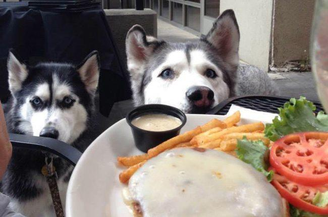 dog-friendly-restaurant.jpg