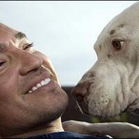 Kutyapszichológia - az állaterápiáról