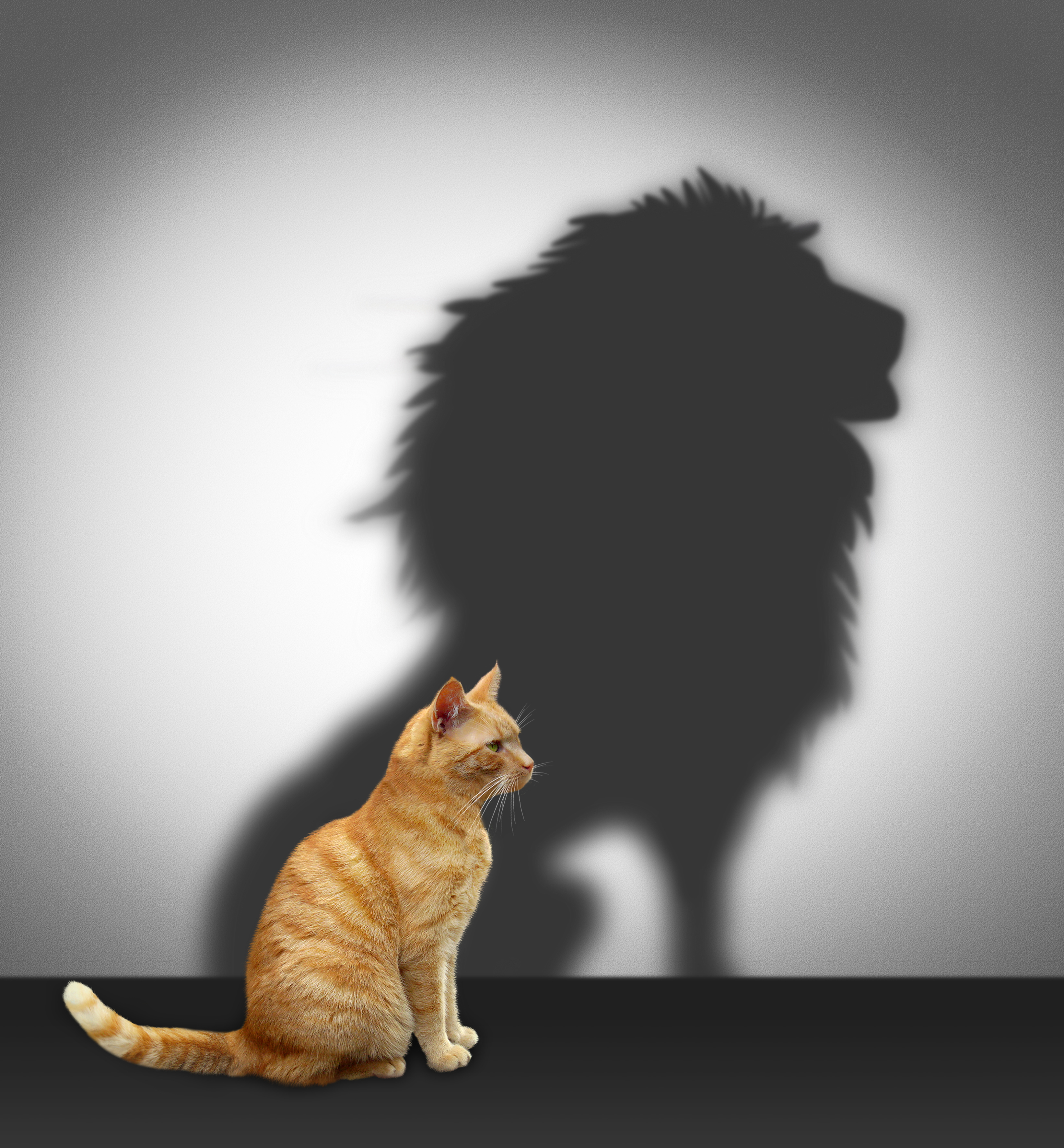 confidence-cat-lion.jpg