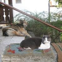 Confuse-A-Cat - Hogyan zavarjunk össze egy macskát?