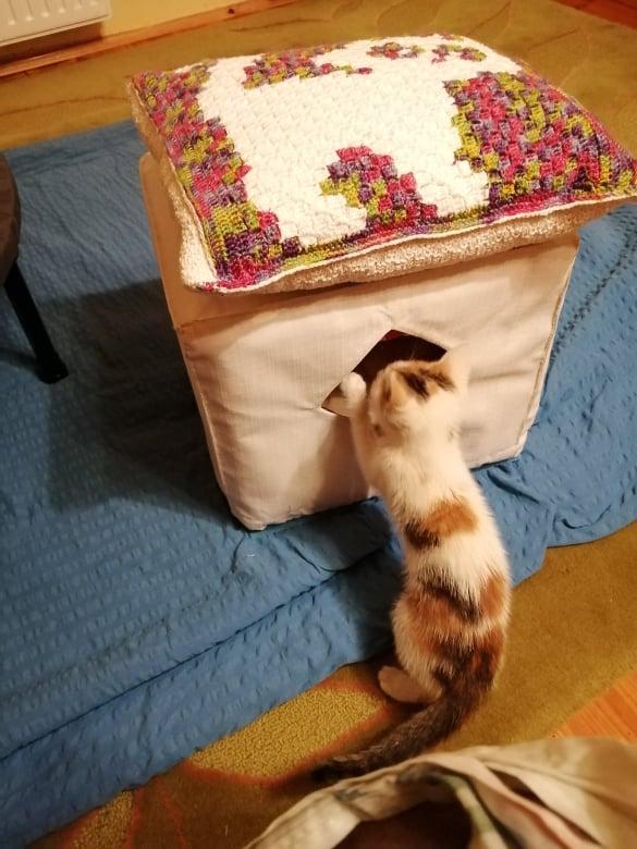 Zazie a házban, ami neki készült.