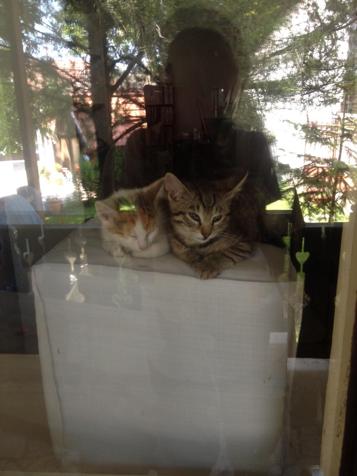 Lazulunk az ablakban, a háztetőn...