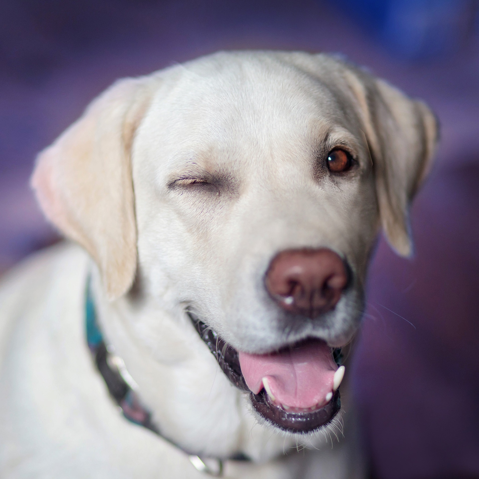 dog-2944964_1920_1.jpg