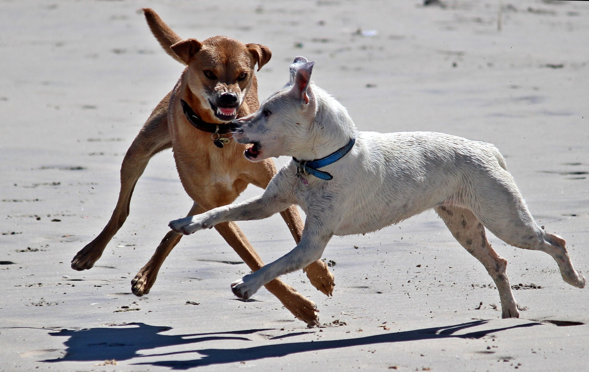 dogs-1345211_1920.jpg