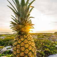 Gyümölcsözön | Miért fogyasszunk Ananászt?