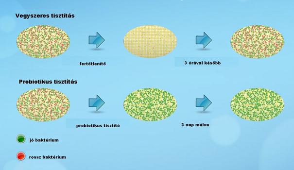 probiotikus baktériumok