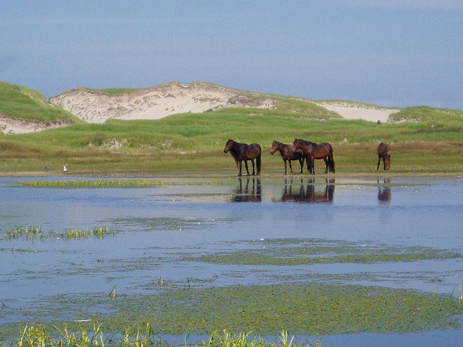 http://www.calgaryherald.com/travel/Canada+once+forbidden+Sable+Island+exotic+maritime+adventure/11144069/story.html