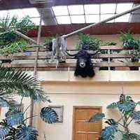 [Adáshiba] Hotel Dzsungel, Nyíregyháza