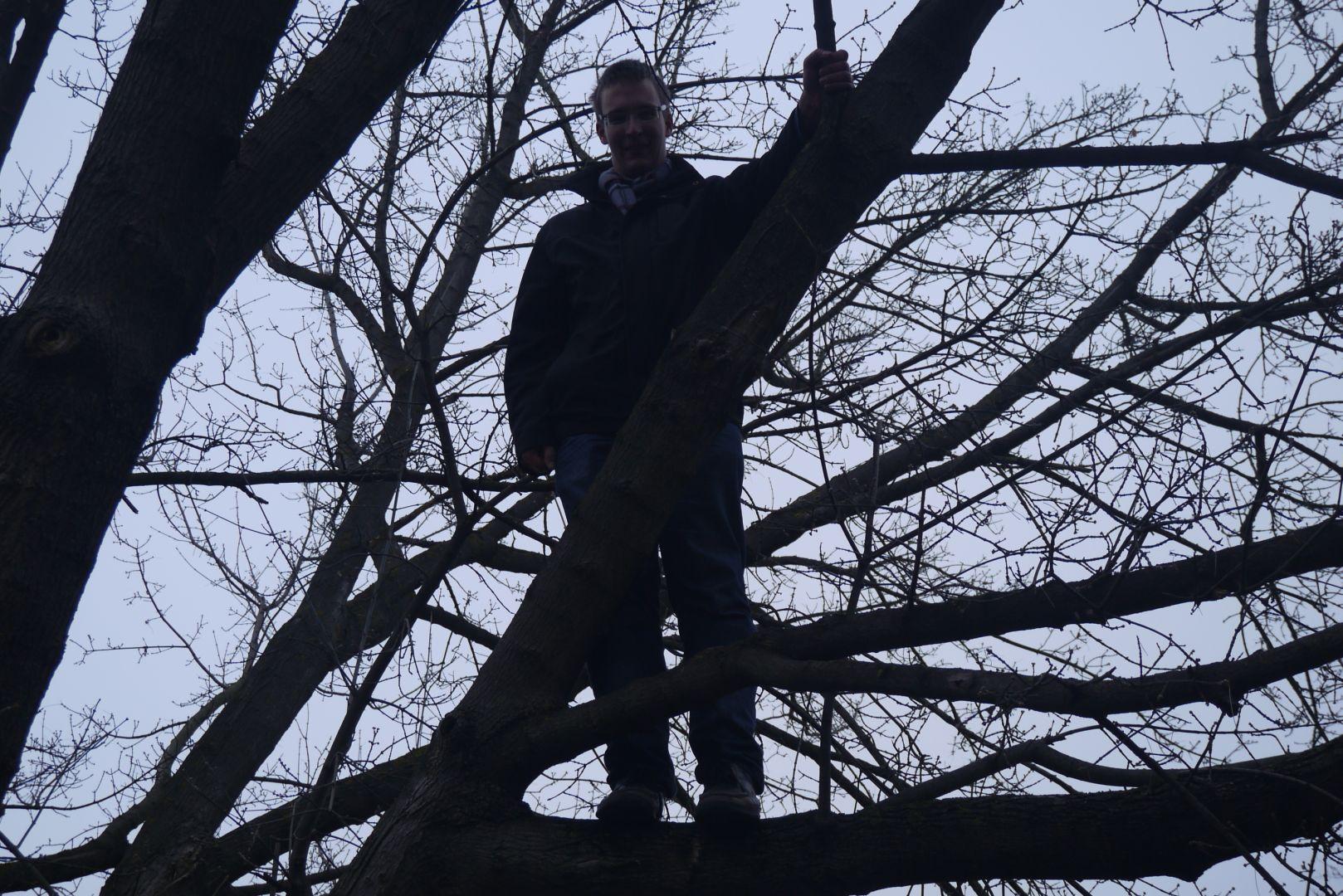 Pókember a fán.