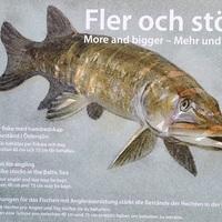 Svédországi horgászatok 4. - tavaszi túranapló 1.