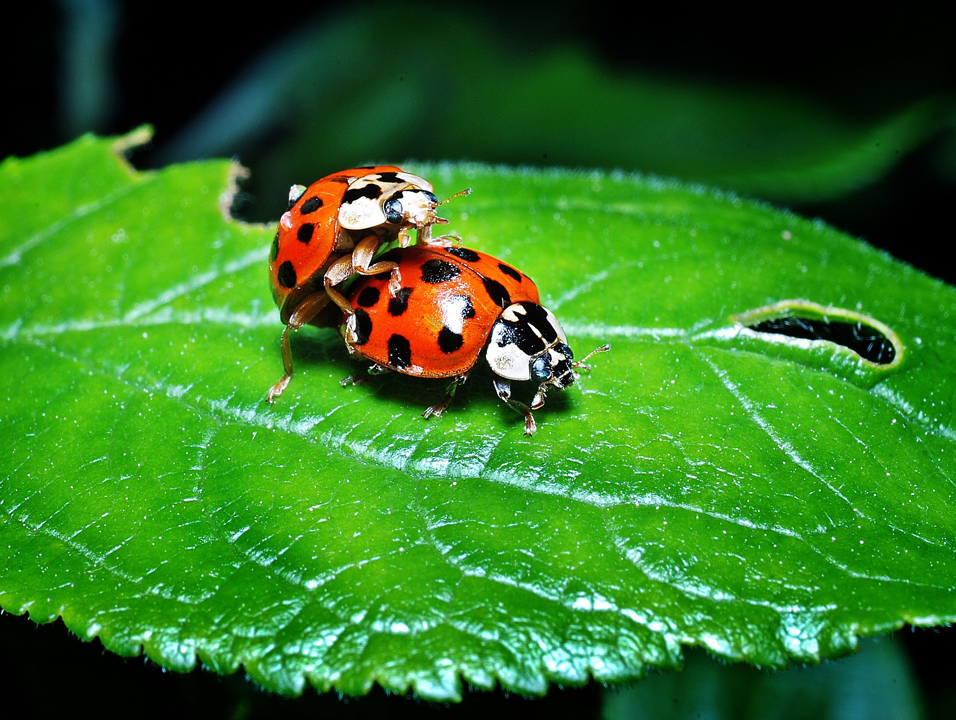 insect-3373039_1920_1.jpg