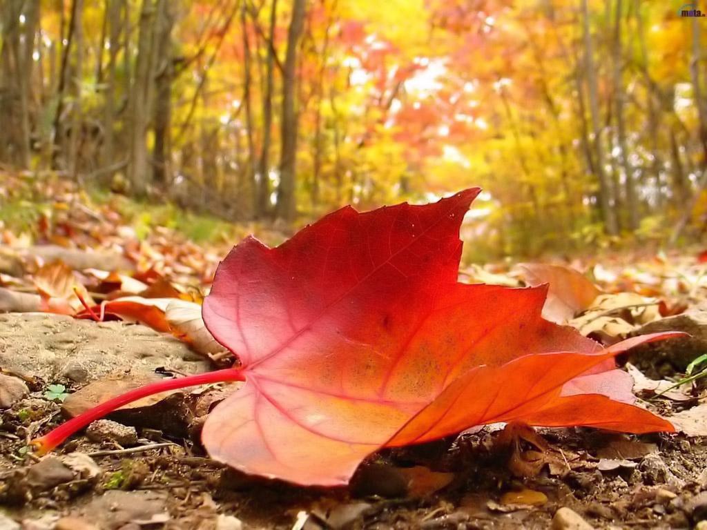 Autumn-falling-leaf.jpeg