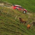 Új-Zéland Rally 2008 - a verseny bociszemmel