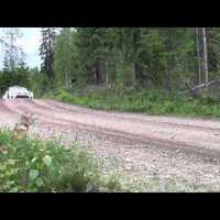 A Polo WRC finnországi pályákon röpköd