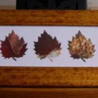 Kreatív matek: 3 falevél + 1 képkeret + fél óra = őszi dekoráció