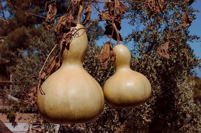 bottle-gourd-3873644_640.jpg