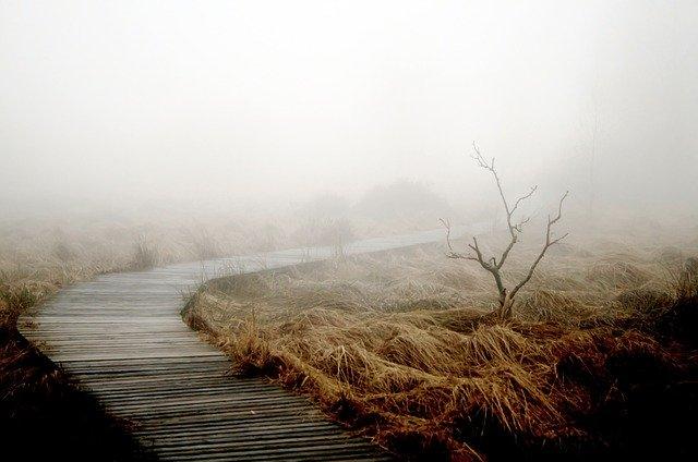fog-258232_640.jpg