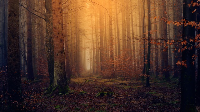 forest-3119826_640.jpg