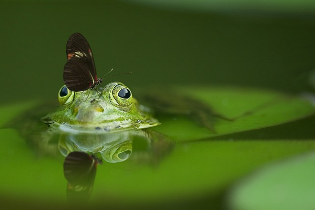 frog-540812_640.jpg