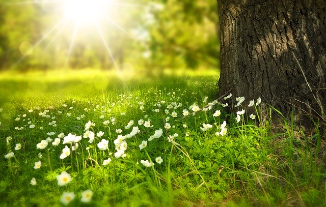 spring-276014_640_1.jpg