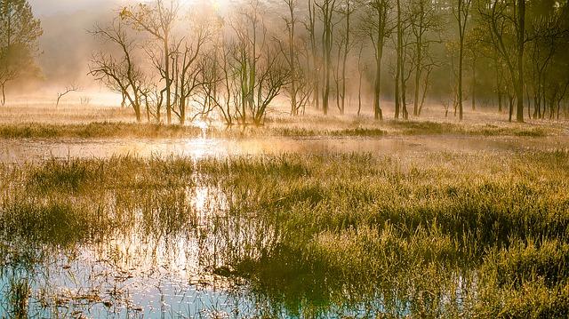 swamps-3057911_640.jpg