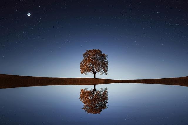 tree-838667_640.jpg