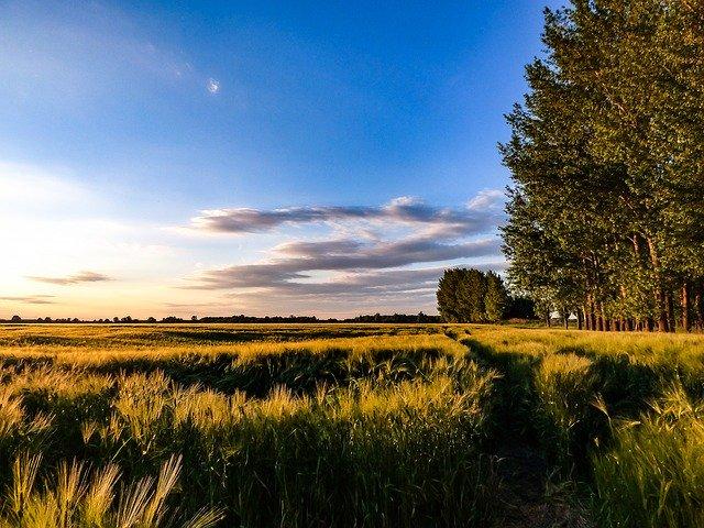 wheatfield-2349589_640.jpg
