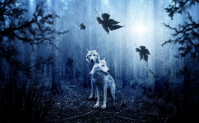 wolf-2864647_640.jpg