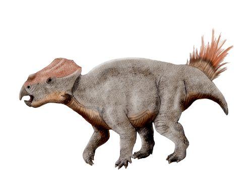 ajkaceratops_nt.jpg