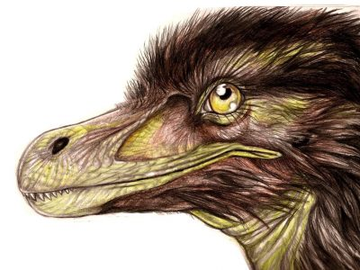 pneumatoraptor.jpg