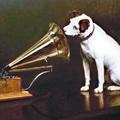 Pop & Dogs – Beleugattak a zenetörténetbe